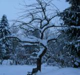 Free Photo - Winter Snow