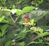 Free Photo - Butterfly in Tree