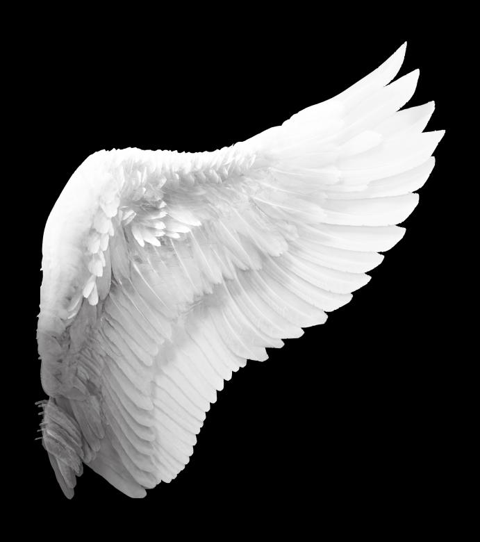 Free Stock Photo of White Angel Wing Created by Eric