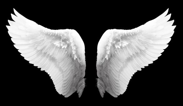 White Angel Wings - Free Stock Photo