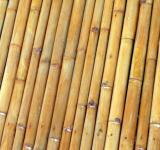 Free Photo - Isolated Bamboo Background