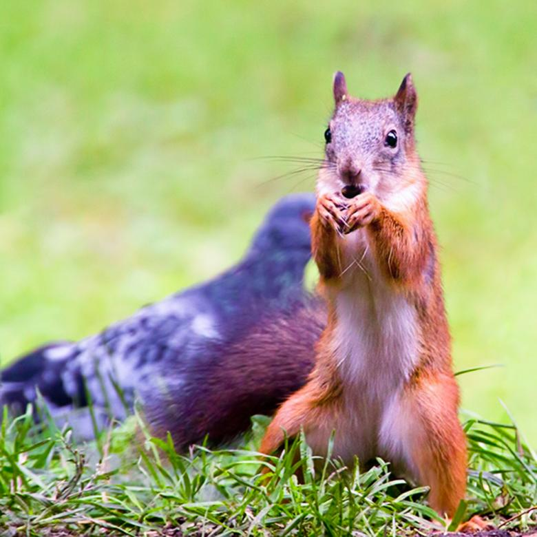 Free Stock Photo of Squirrel Created by 2happy