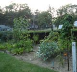 Free Photo - Vegetable Garden 2