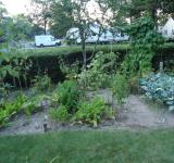 Free Photo - Vegetable Garden