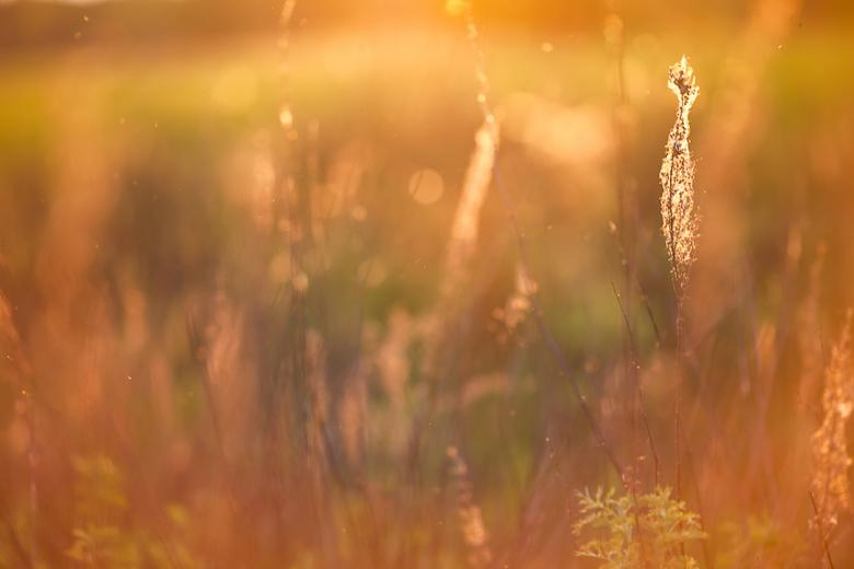 Free Stock Photo of Sunshine field Created by skydie