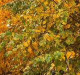 Free Photo - Autumn leaves
