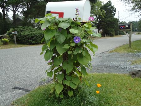 Mailbox with Vines Flowers - Free Stock Photo