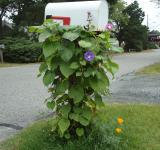 Free Photo - Mailbox with Vines Flowers