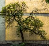 Free Photo - Small tree next to the wall