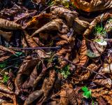 Free Photo - Leafy ground texture