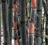 Free Photo - Bamboo Stems