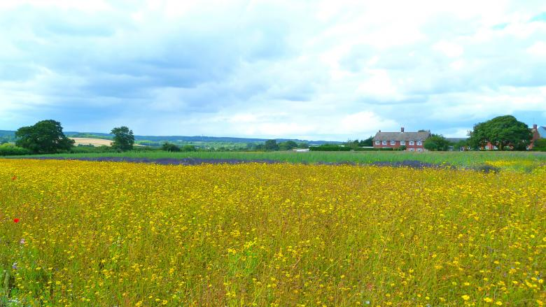 Free Stock Photo of The Yellow Meadow Created by Miss Evita