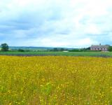 Free Photo - The Yellow Meadow