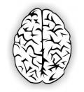 Free Photo - Brain vector