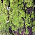 Free Photo - Mossy Bark Background