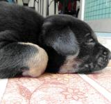 Free Photo - Cute Sleeping Puppy
