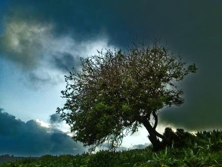Tree on a background of cloudy Landscape - Free Stock Photo
