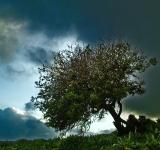 Free Photo - Tree on a background of cloudy Landscape