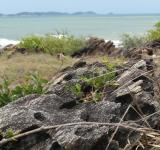 Free Photo - Rocky Tropical Coastline