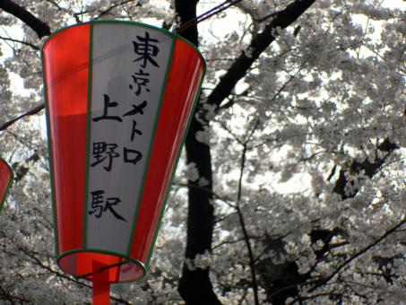 Festival lanterns with cherry blossom - Free Stock Photo