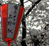 Free Photo - Festival lanterns with cherry blossom