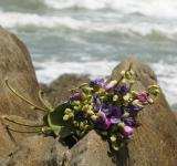 Free Photo - Bouquet on Ocean Rocks