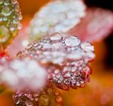 Free Photo - Autumn foliage