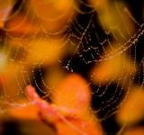 Free Photo - Wet spider web