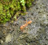 Free Photo - Ant walking on rock