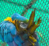 Free Photo - Blue Gold Macaw