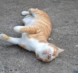 Free Photo - Adult cat lay down