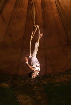 Circus acrobat - Free Stock Photo