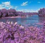 Free Photo - Thousand Islands Scenery - Lavender