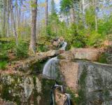 Free Photo - Trickling Forest Stream - HDR