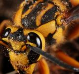 Free Photo - Yellow Jacket