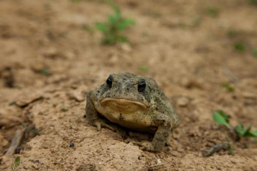 Grumpy toad - Free Stock Photo