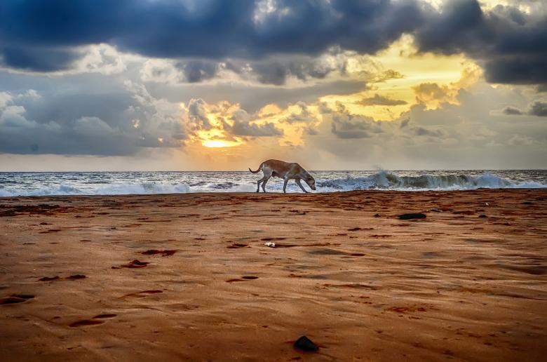 Free Stock Photo of A cloudy sunset with alone dog Created by DEEPU DAS