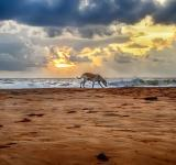 Free Photo - A cloudy sunset with alone dog