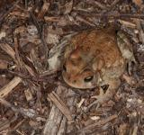 Free Photo - Toad