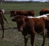Free Photo - Texas Longhorns