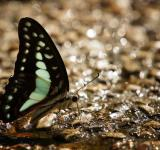 Free Photo - Blue Winged Butterfly