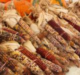 Free Photo - Indian corn