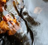 Free Photo - Autumn Stream