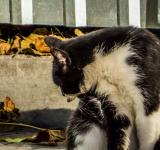 Free Photo - Hobo cat