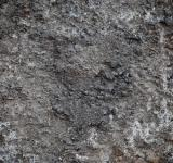 Free Photo - Muddy Soil Surface