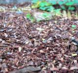 Free Photo - Forest Floor