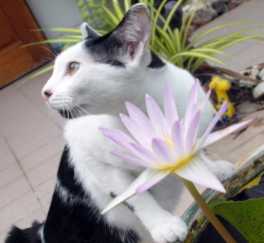 Cat With Water Lily - Free Stock Photo