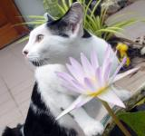 Free Photo - Cat With Water Lily