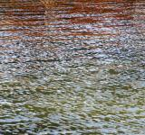 Free Photo - Water Ripples Background