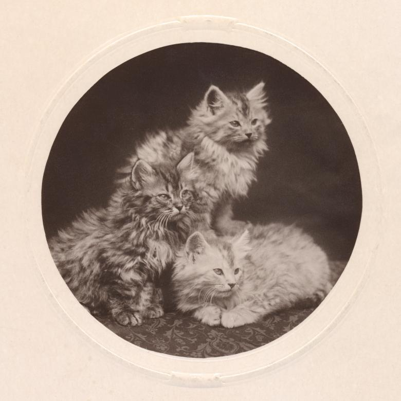 Free Stock Photo of Cute Antique Kittens - Circa 1908 Created by Nicolas Raymond